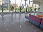 Indoor Plants on Rent for Corporate Offices in Gurgaon .